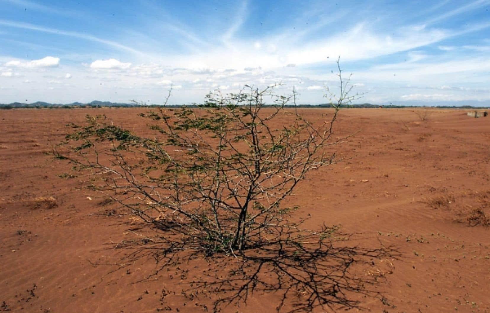Dans certaines r&eacute;gions du monde, la d&eacute;forestation et ses cons&eacute;quences, comme la d&eacute;sertification des terres et le manque d&rsquo;eau potable, appauvrissent la vie humaine et la rendent souvent sordide. <br />