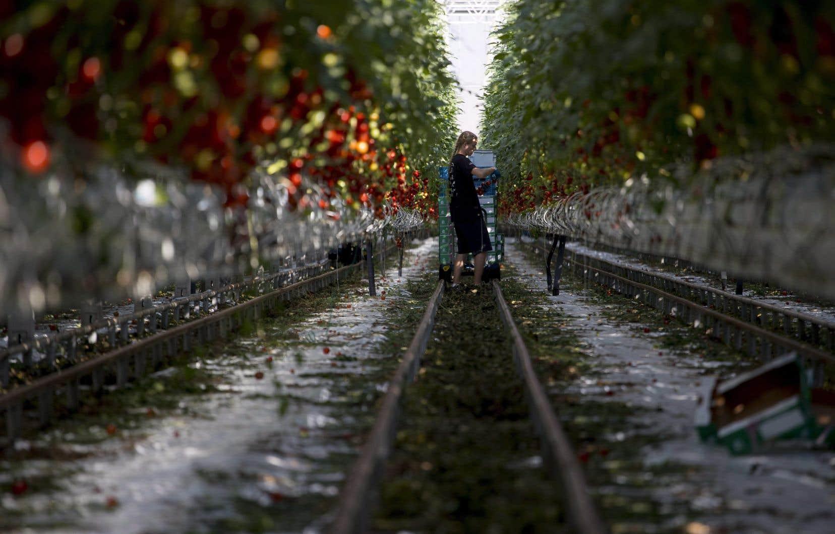 Les entreprises productrices de plantes ornementales et de plants de légumes embauchent au début du printemps des travailleurs temporaires, souvent payés à un salaire à peine plus élevé que le salaire minimum.