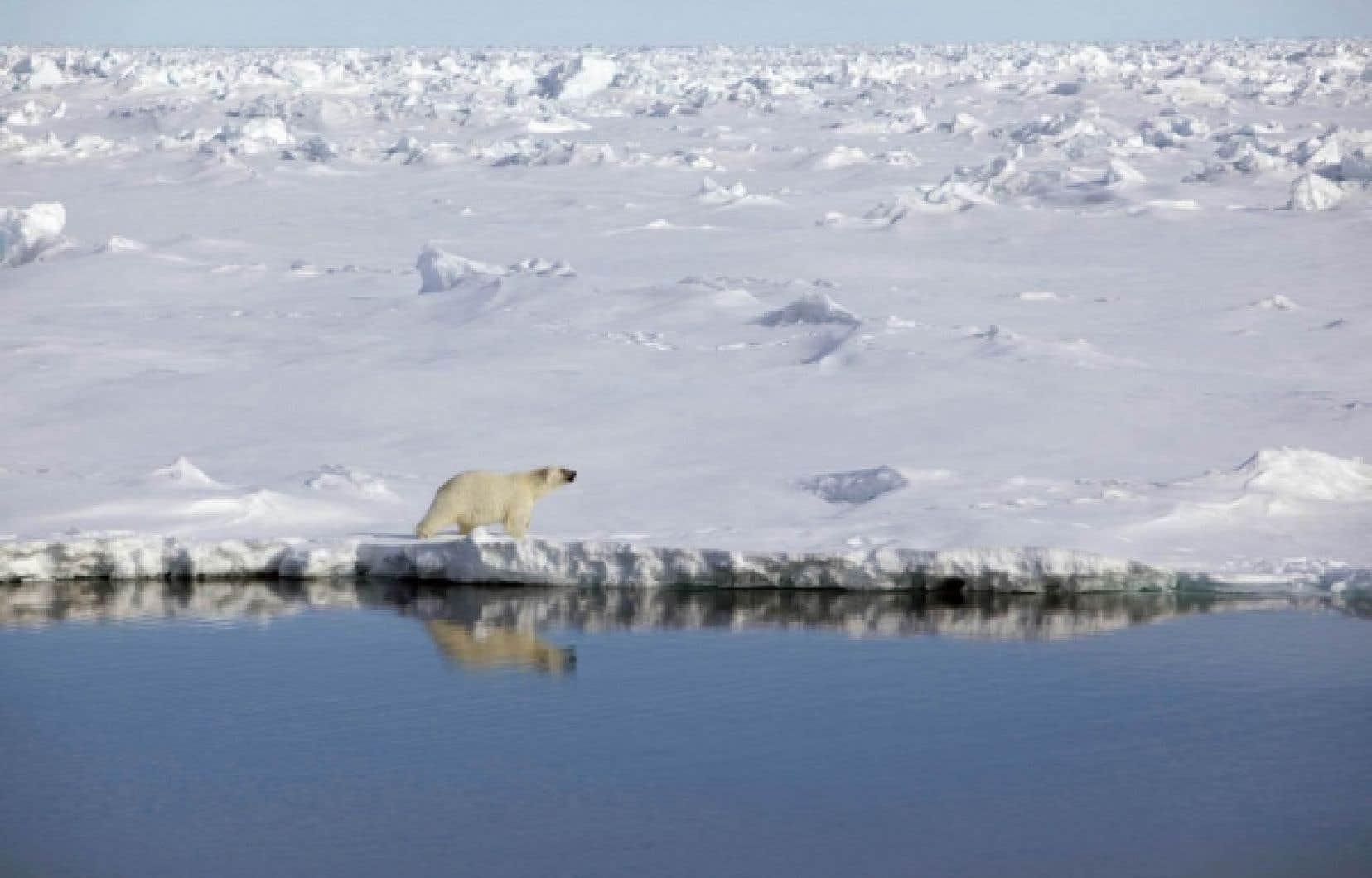 Un ours polaire sur les rives du canal Robeson, à la frontière entre le Canada et le Groenland<br />