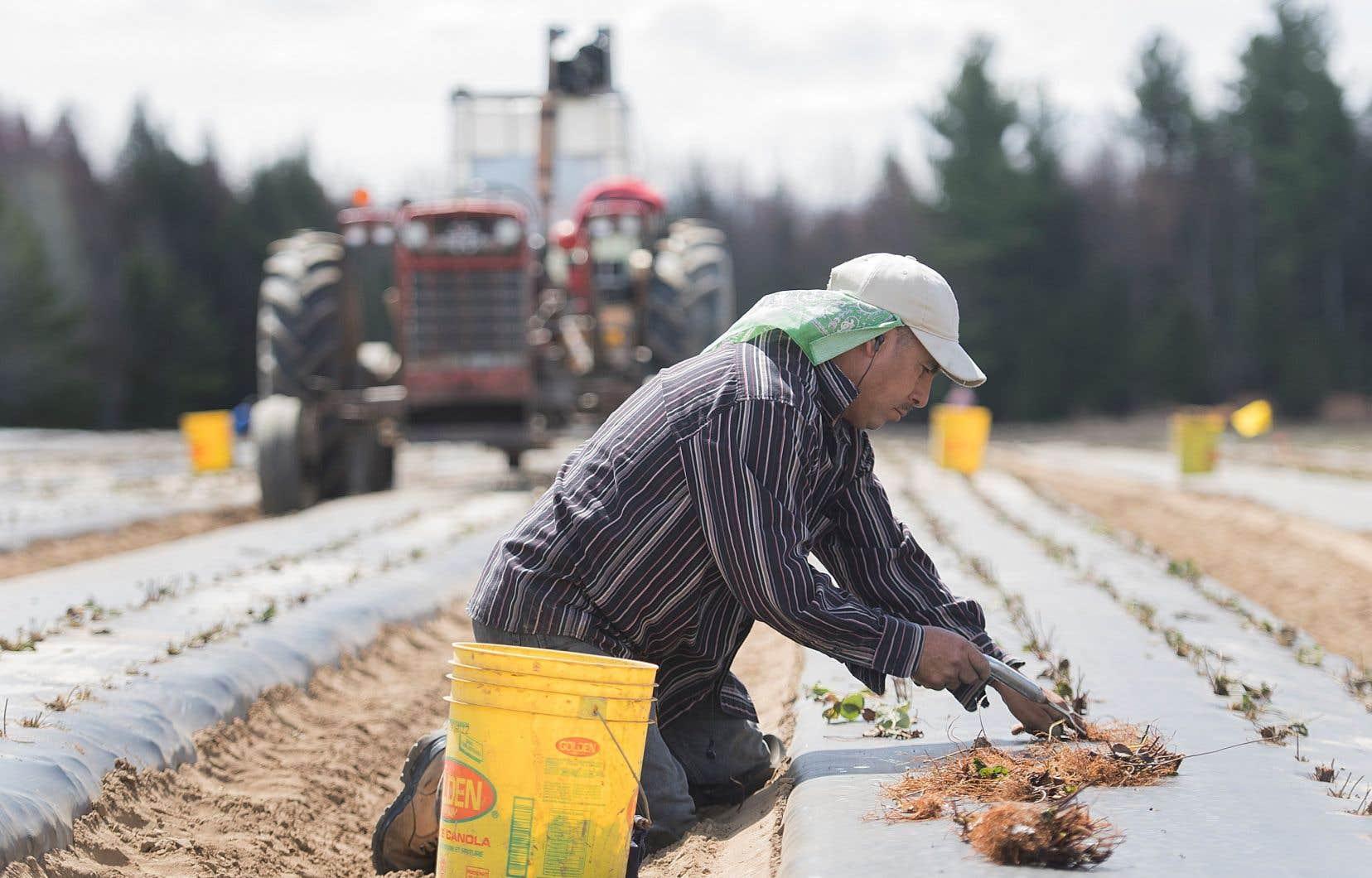 Les gros joueurs du monde agroalimentaire réclament une aide financière supplémentaire des gouvernements, prétextant que «les programmes actuels ne répondent absolument pas aux enjeux exceptionnels que nous traversons».