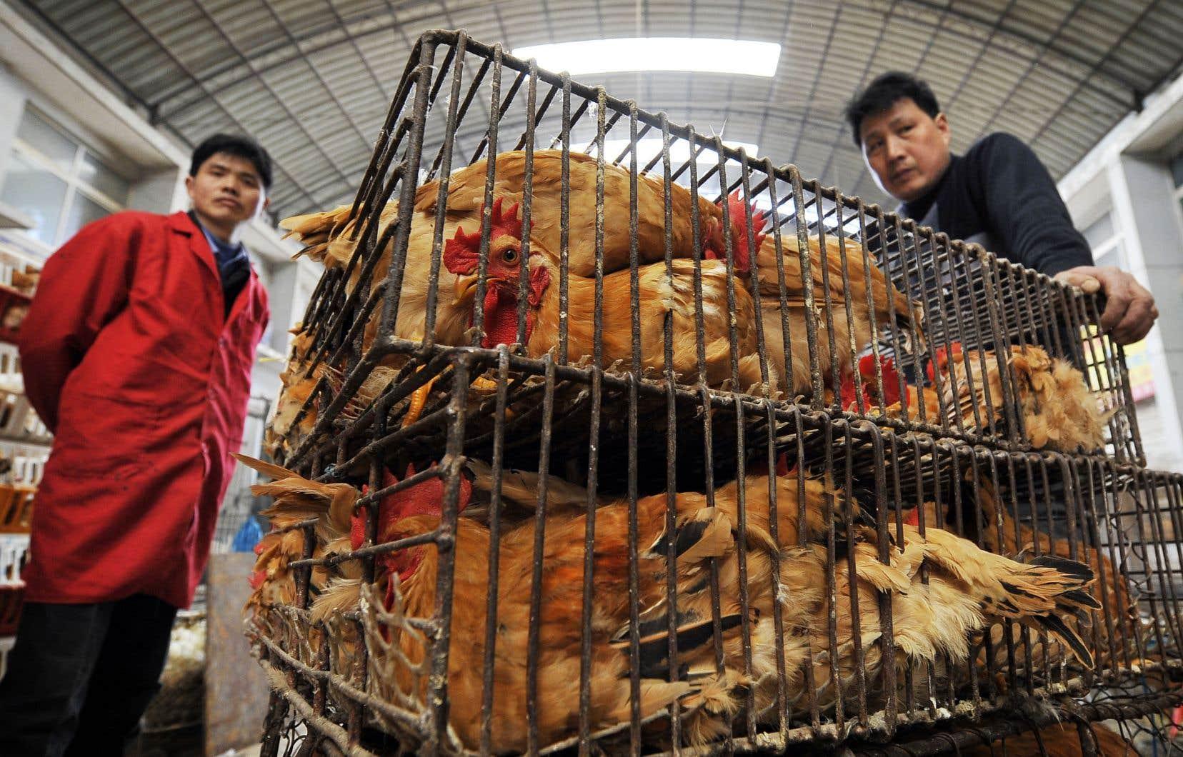 Le marché de Wuhan, en Chine
