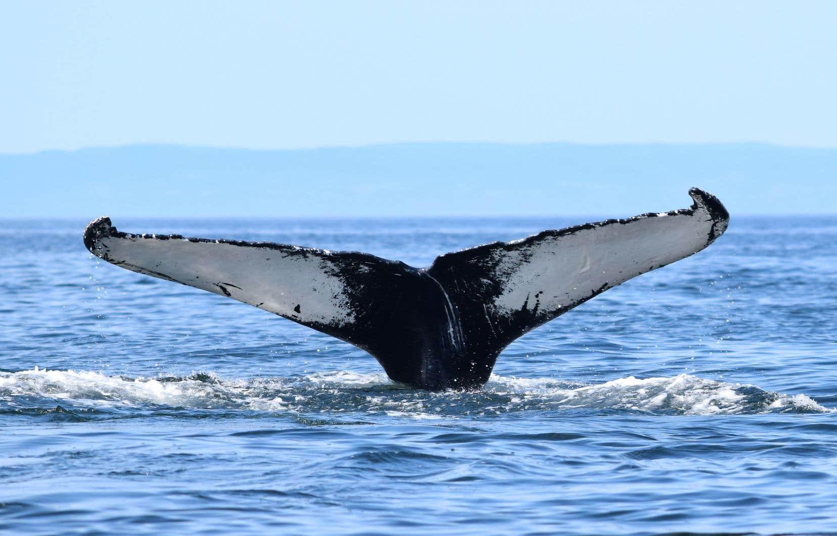 Le bruit augmente constamment dans les milieux marins, au point de doubler tous les 20ans.
