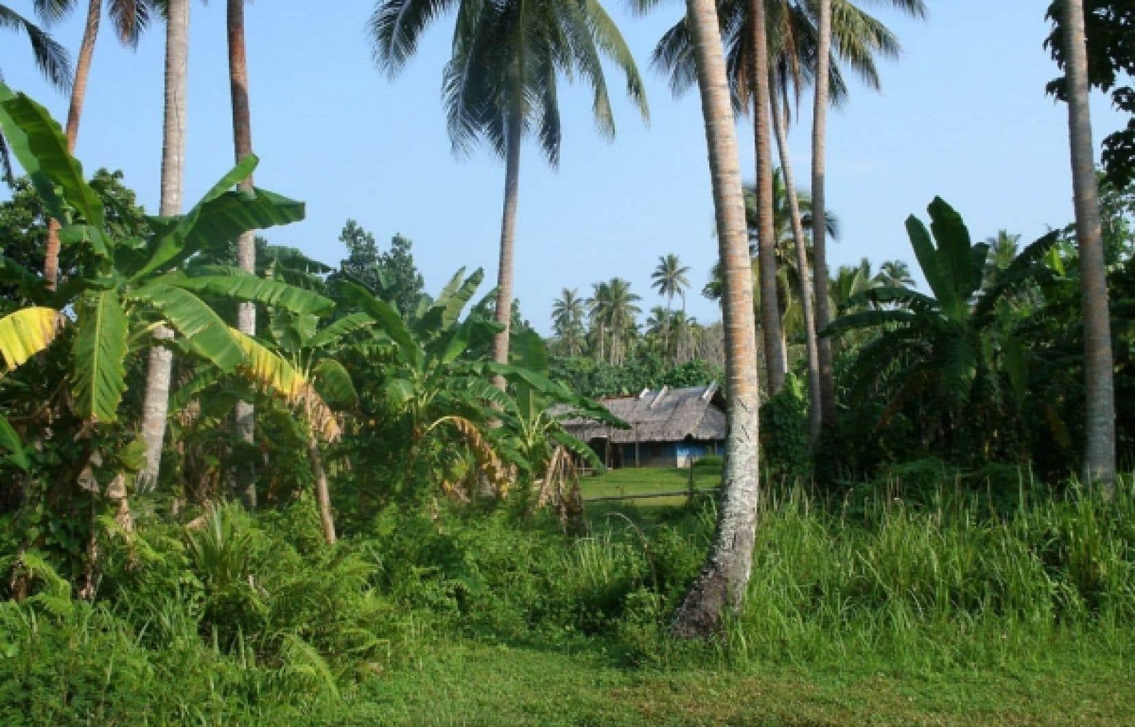 Dans la brousse du Vanuatu, il suffit de tendre la main pour cueillir un fruit exotique.<br />