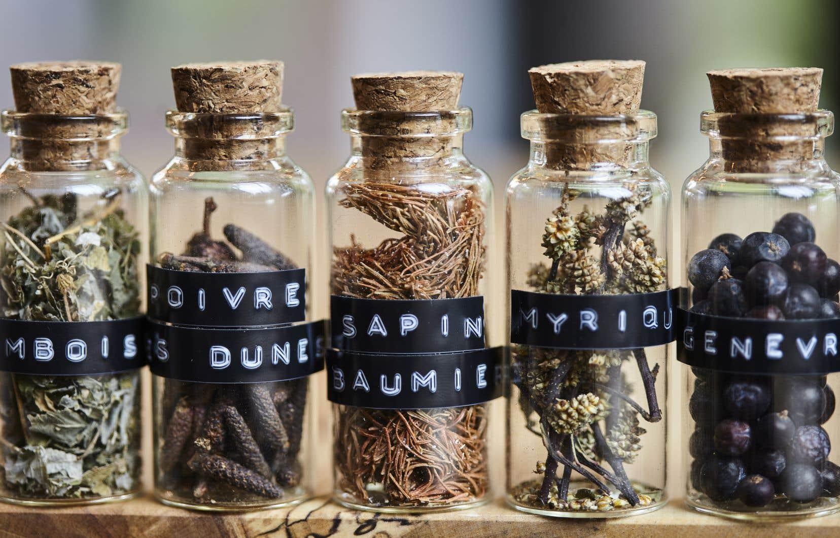 Les spiritueux de la Distillerie du Fjord mettent en valeur les richesses de la forêt boréale.