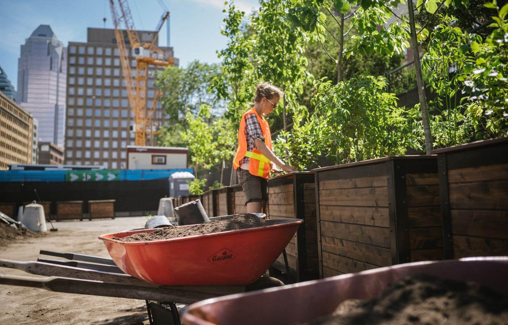 Le Quartier des spectacles prépare actuellement un vaste espace vert sur la place des Festivals pour accueillir les Montréalais durant l'été.