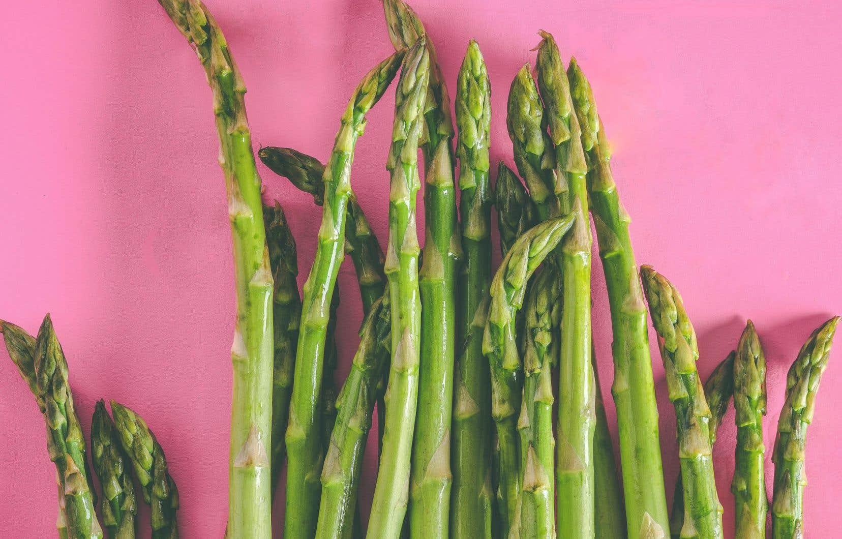 Blanches, vertes ou violettes, l'asperge pousse très facilement au Québec.
