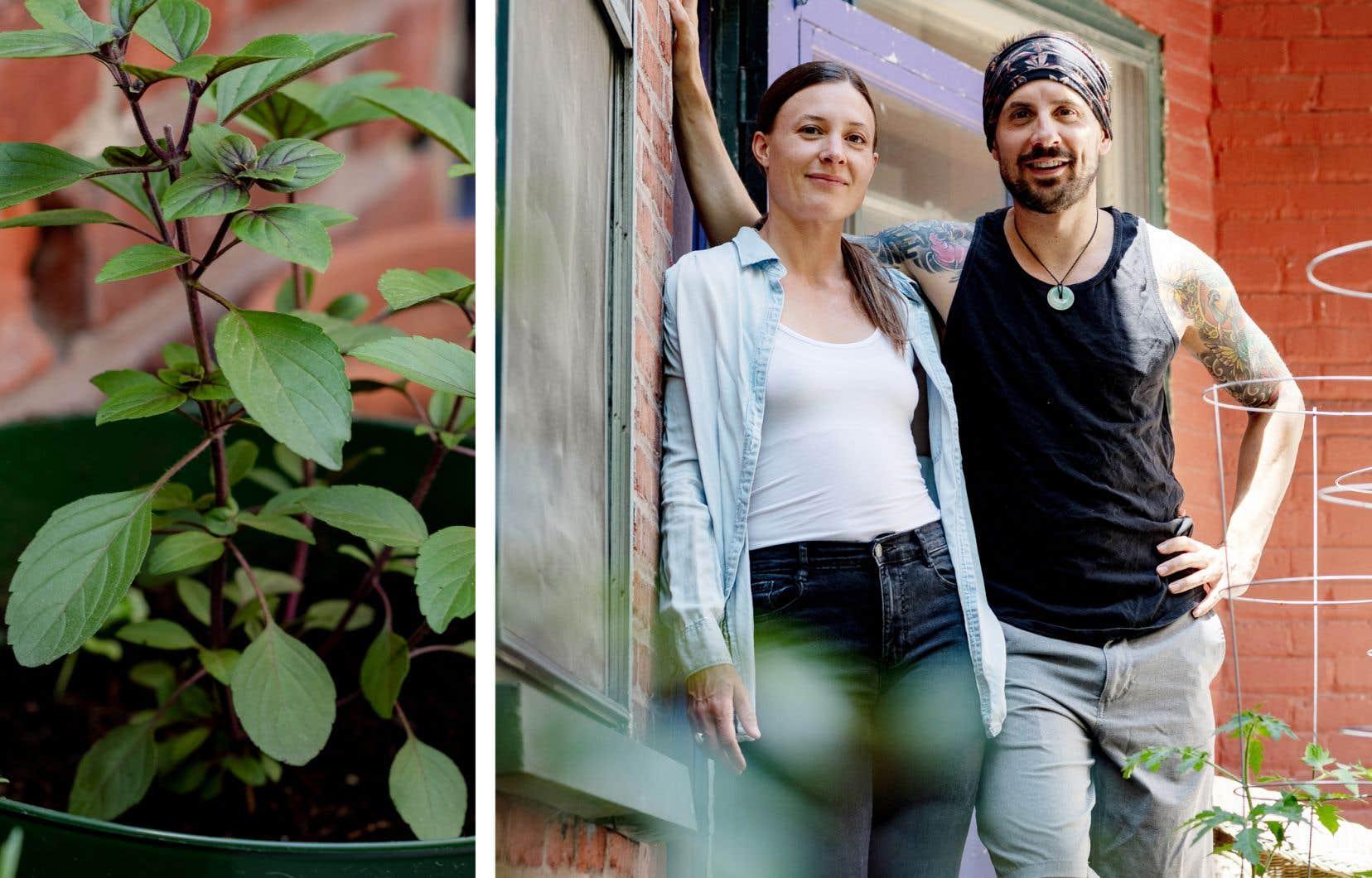 Chloé Robertson et Jonathan Audet sur le balcon de leur appartement, où ils font pousser arbres fruitiers, fines herbes et herbes médicinales.