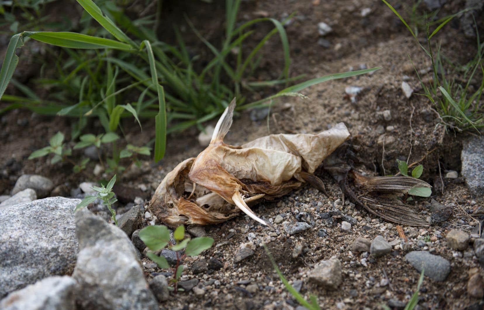 La cause de la mortalité des poissons est encore inconnue.