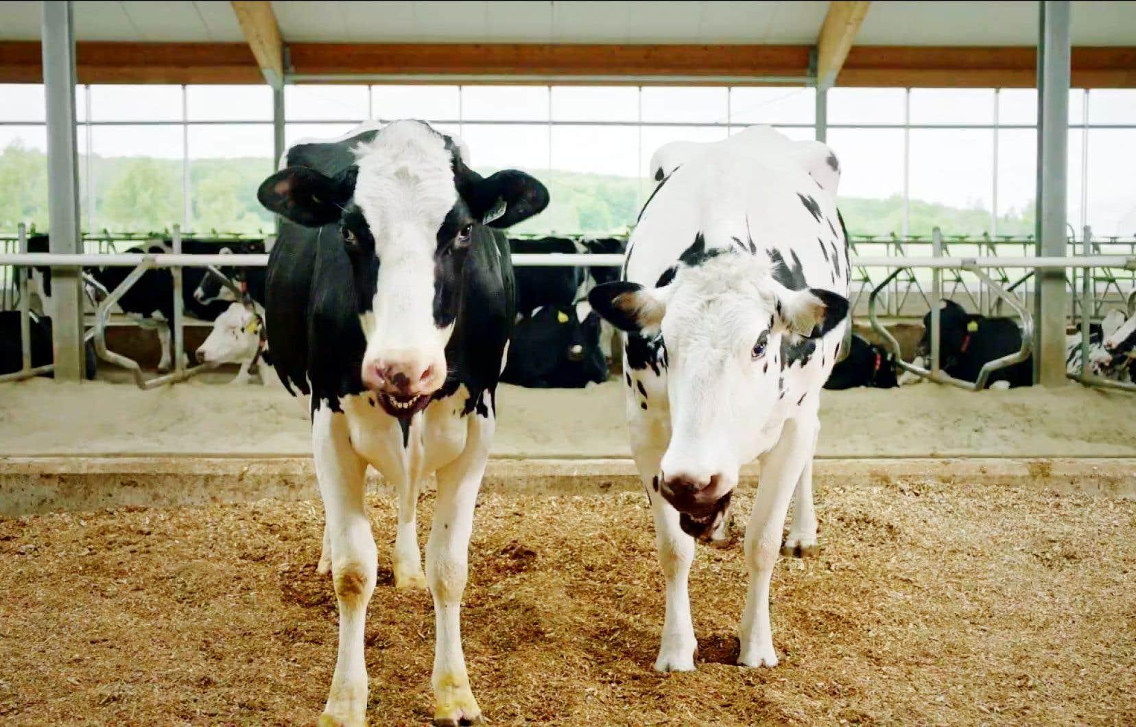 La campagne «Payez-vous la traite», utilisantl'humour pour aider à écouler les surplus de lait occasionnés par la fermeture des cafés et des restaurants (soit 35% du marché), montrait des vaches parlantes «qui connaissent vraiment ça, la traite».