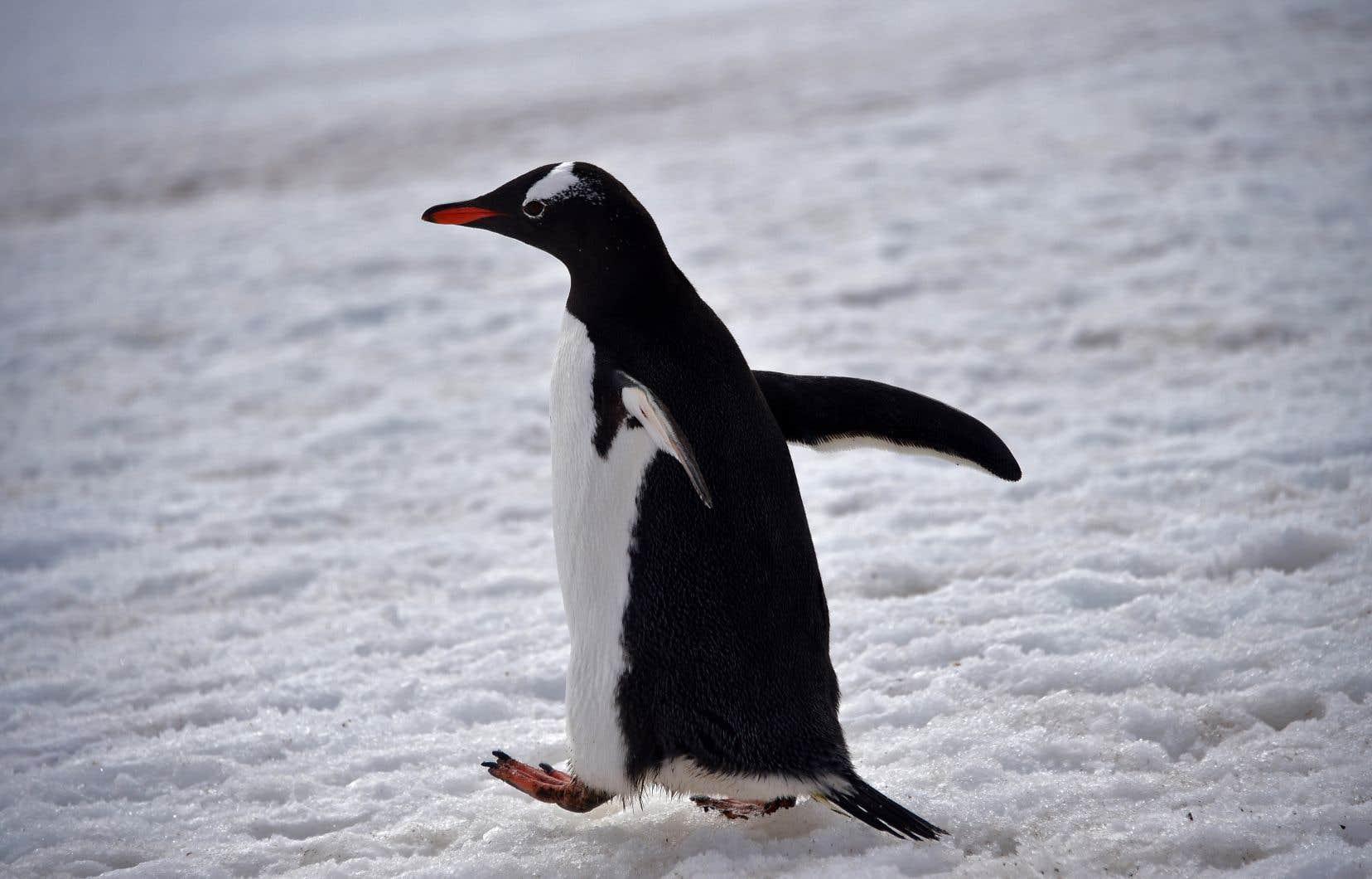 La majeure partie de l'Antarctique occidental et de la péninsule antarctique a subi un réchauffement et une fonte des glaces dans la deuxième moitié du XXesiècle.