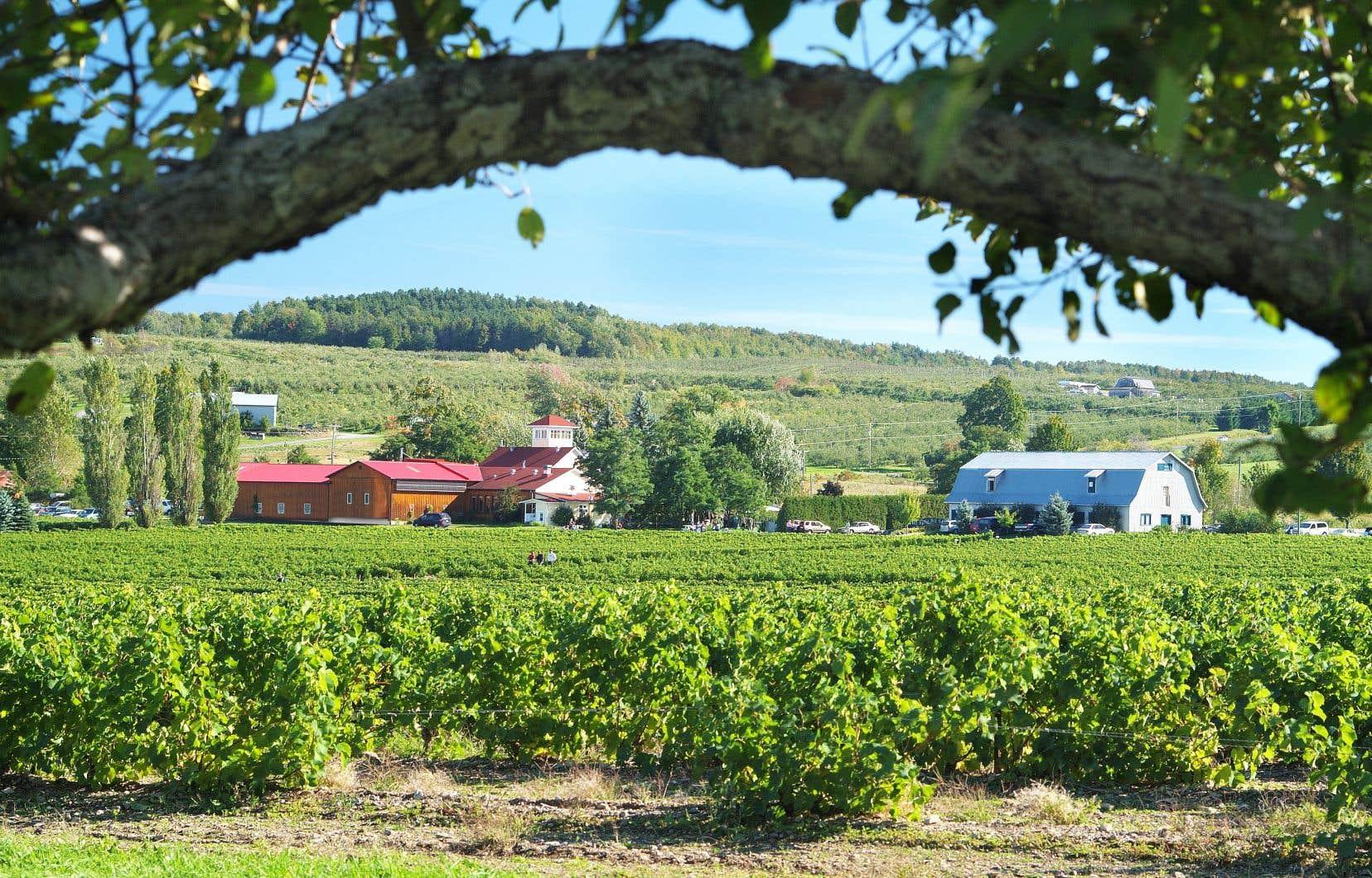 La COVID-19 perturbe-t-elle actuellement d'une manière ou d'une autre la vie au vignoble, qu'il soit d'ici ou d'ailleurs?