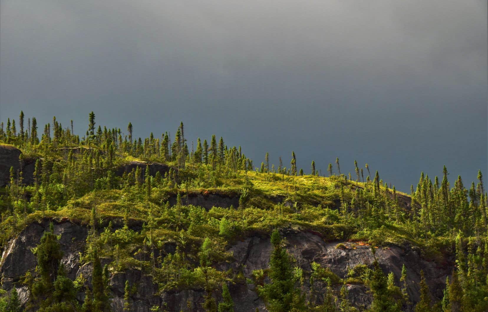 Forêt boréale le long de la Betsiamites