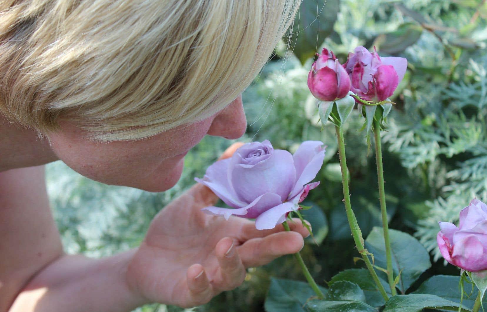 Les neurones olfactifs, placés au fond de notre nez, ont une capacité de régénérescence.