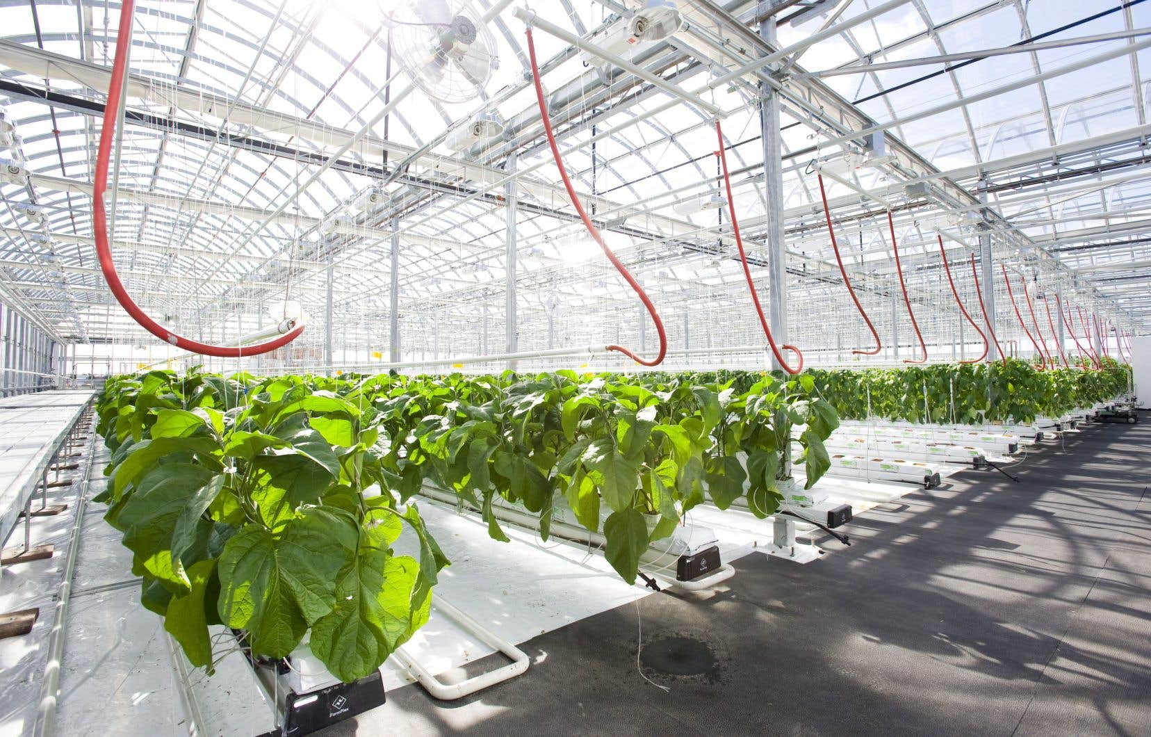 Les producteurs serricoles obtiennent un tarif préférentiel d'Hydro-Québec