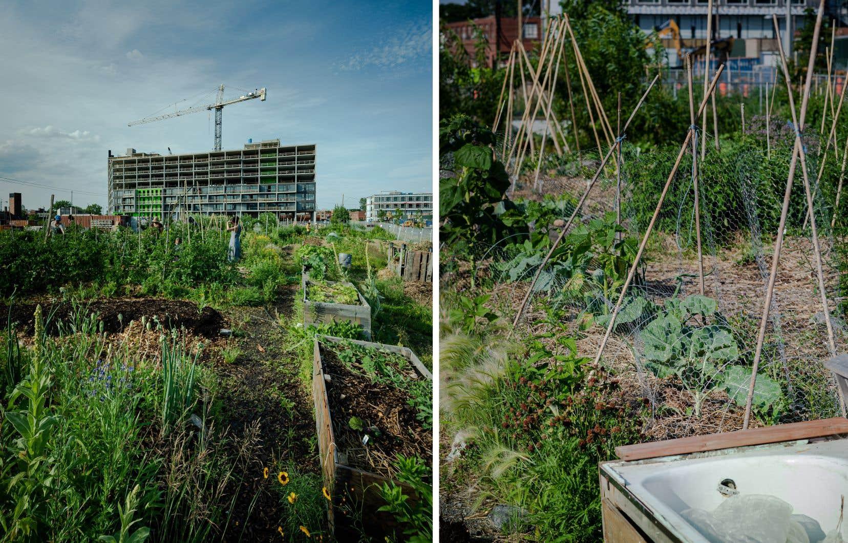 Le jardin de 10000 pi2 accueille un programme de formation en agriculture urbaine pour les citoyens.