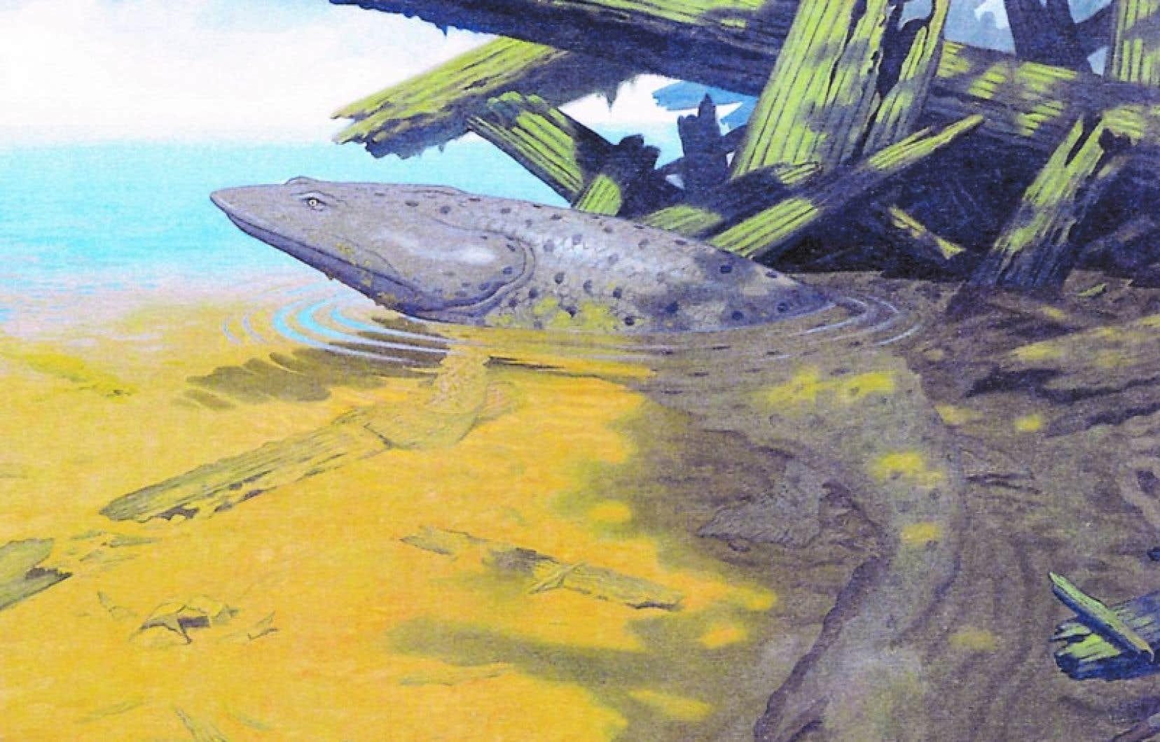 Reconstitution de l'Elpistostege watsoni, dont le fossile vieux de 380 millions d'années a été découvert au parc national de Miguasha, en Gaspésie