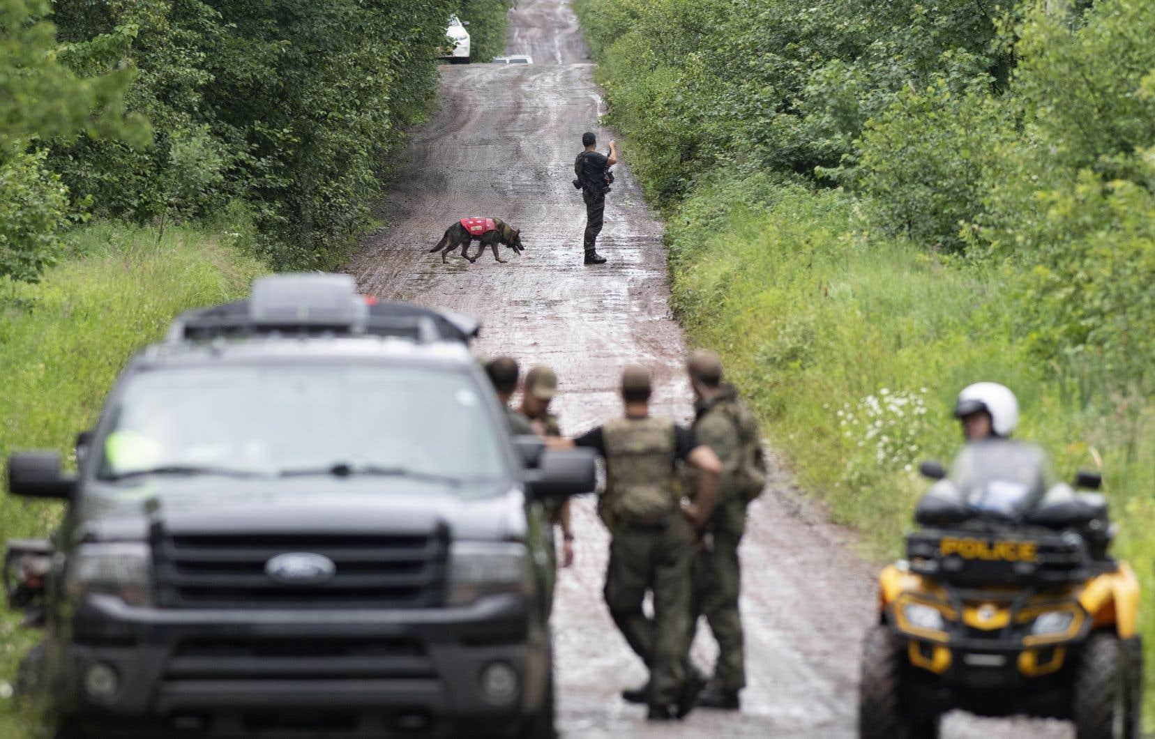 Assistés de maîtres-chiens, les policiers de la Sûreté du Québec ont ratissé en grand nombre un secteur de Saint-Apollinaire, à l'ouest de Lévis, vendredi.