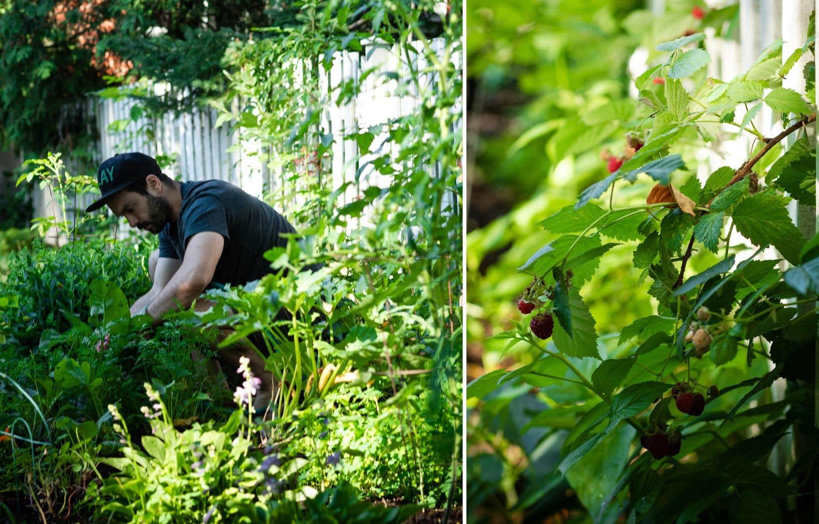 Pierre-Alexandre Henley dans son jardin à l'anglaise, où se côtoient légumes, fines herbes et fleurs comestibles.