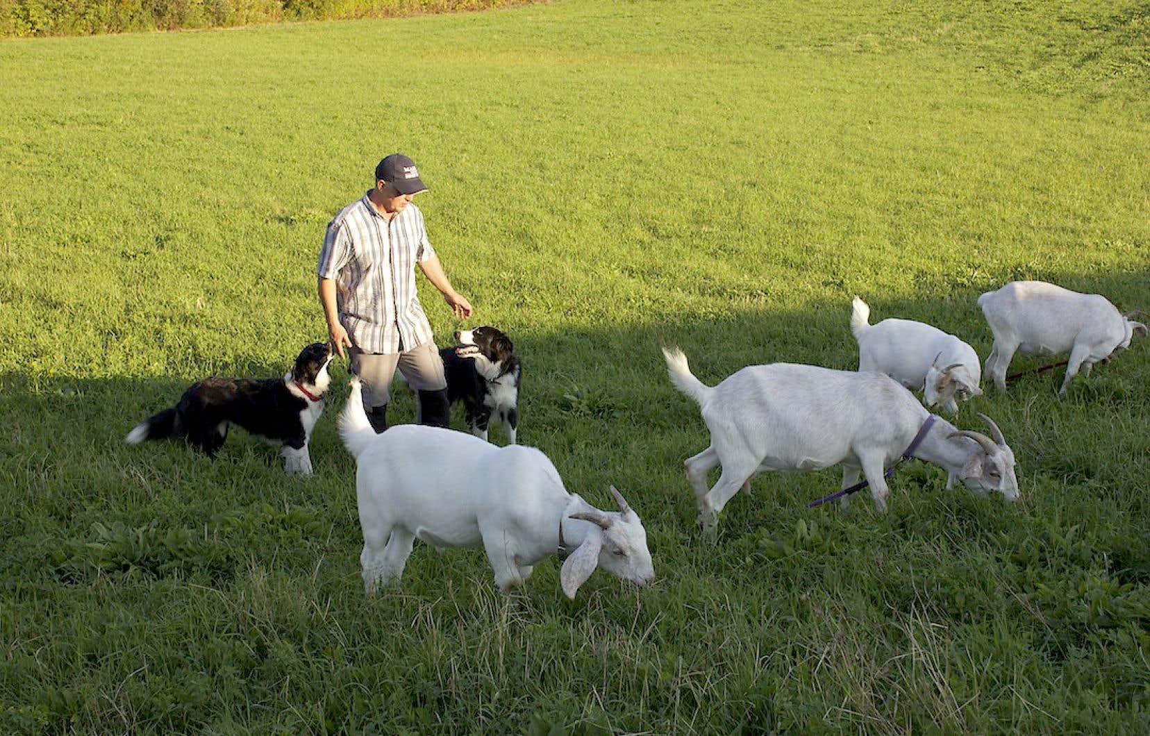 Patrick Leimgruber, berger littéraire, en compagnie de ses chèvres et de ses chiens