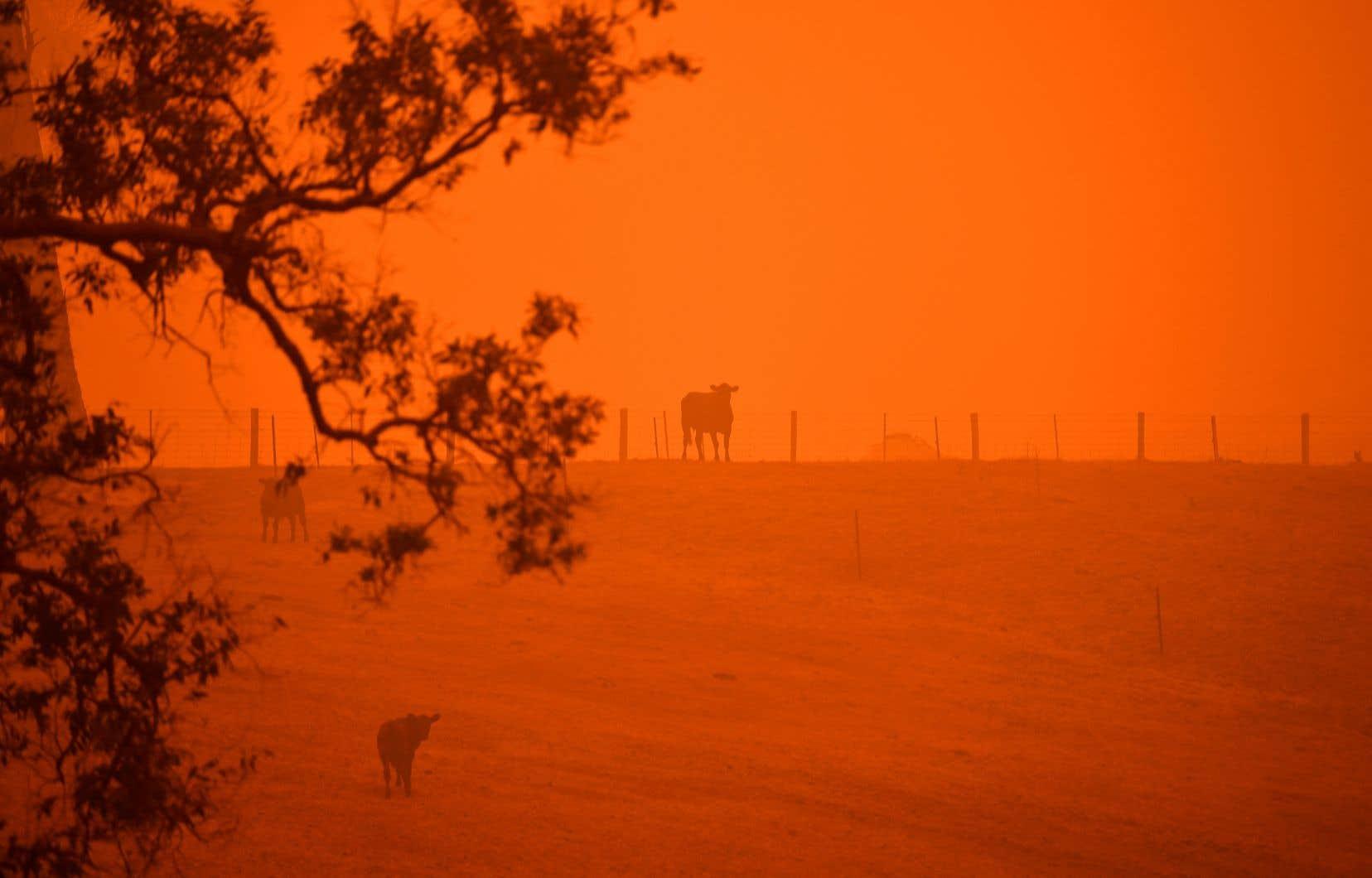 Les feux ont été particulièrement virulents pendant plusieurs mois en 2019-2020, ont détruit 115000 kilomètres carrés.