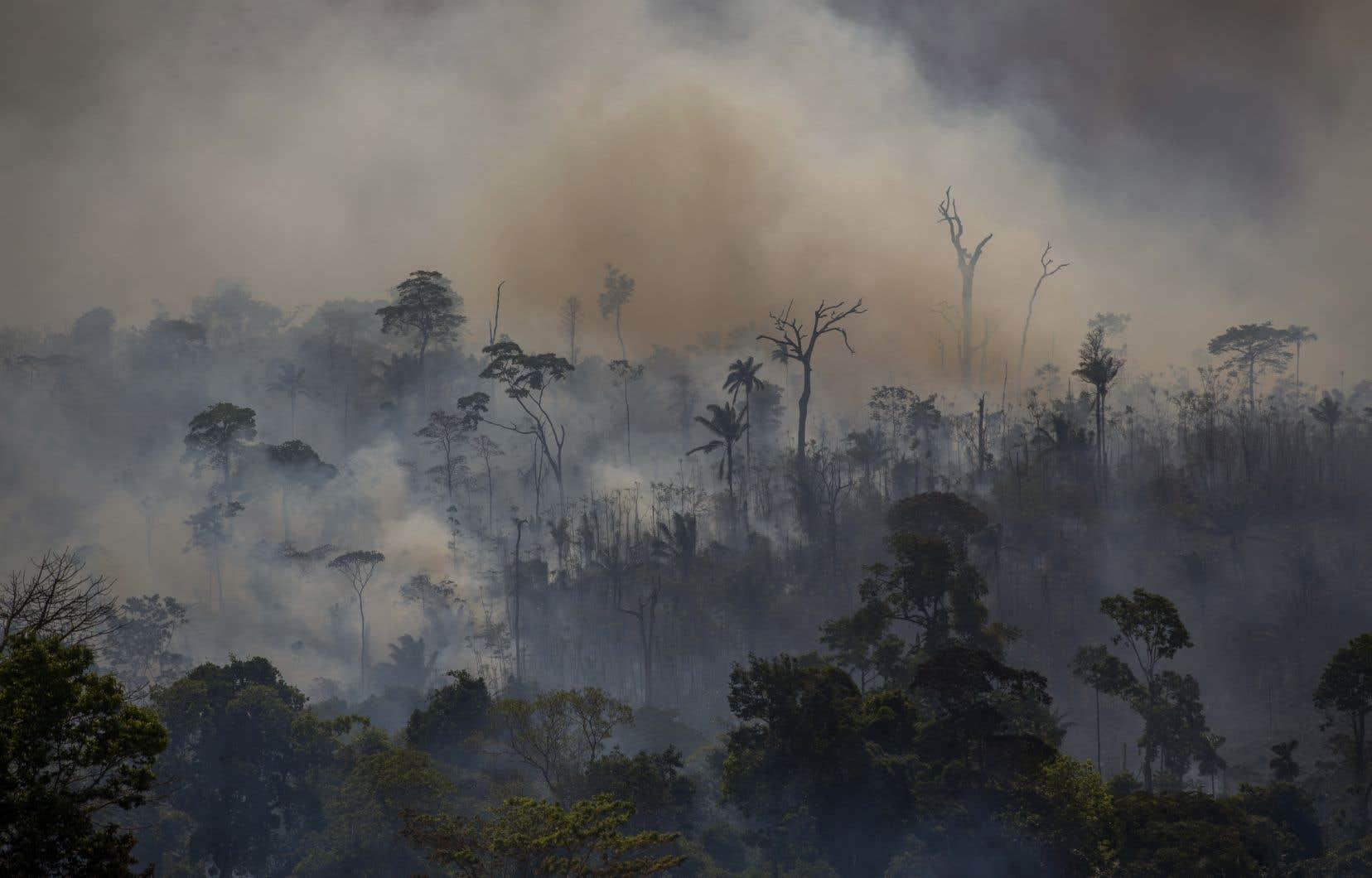 Le nombre d'incendie de forêt en Amazonie a augmenté de 28% en juillet par rapport à l'année dernière.
