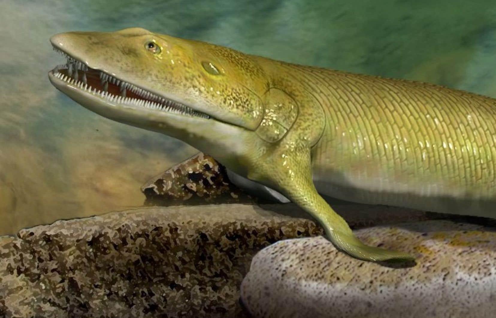 «Elpistostege watsoni» aurait foulé la terre ferme il y a 380 millions d'années.