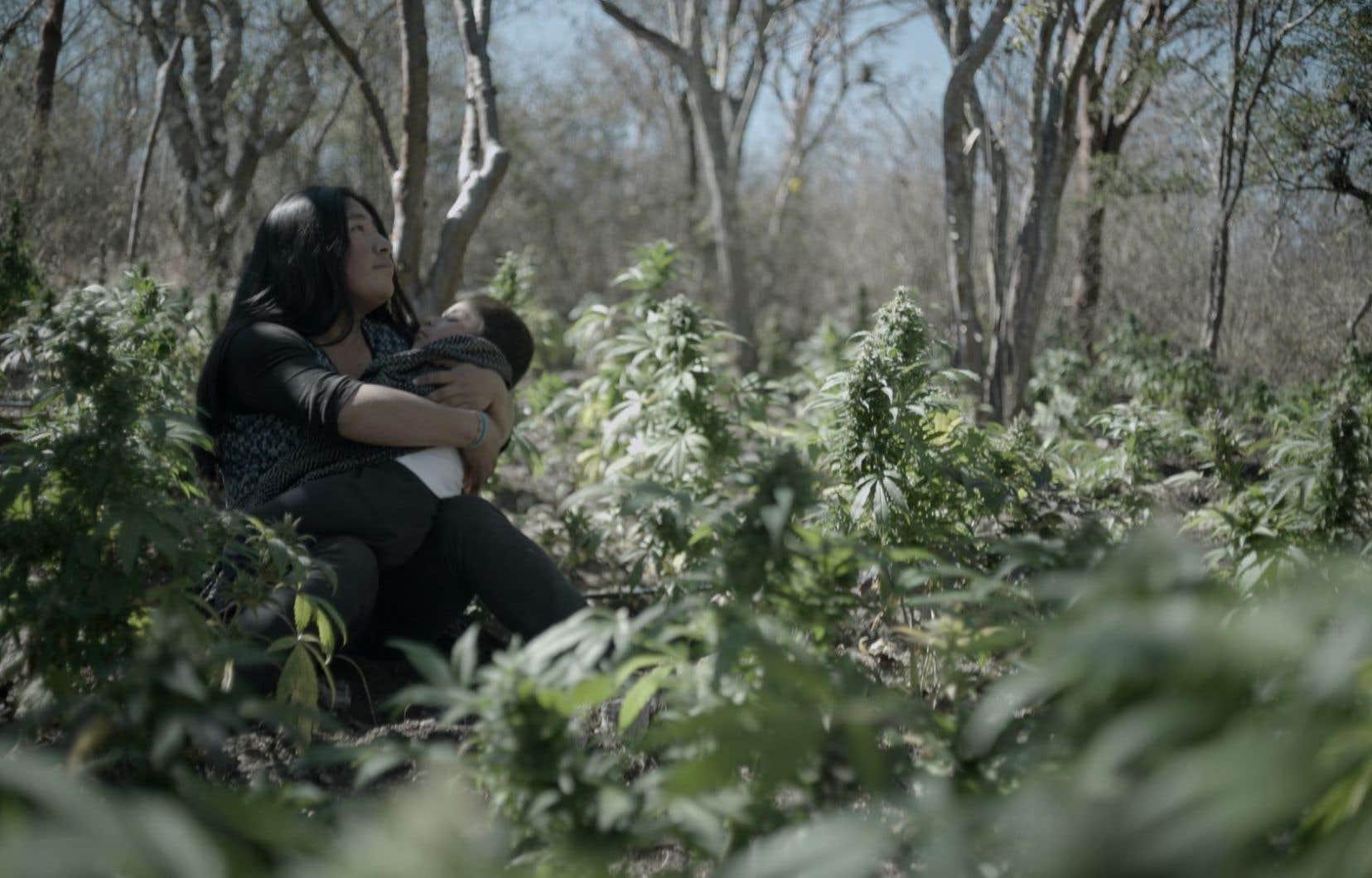 Avec <i>Sanctorum</i>, Joshua Gil explore  le sort d'une communauté autochtone mexicaine, dépendante de la culture du cannabis pour subsister et prise entre les feux des barons de la drogue et de l'armée.