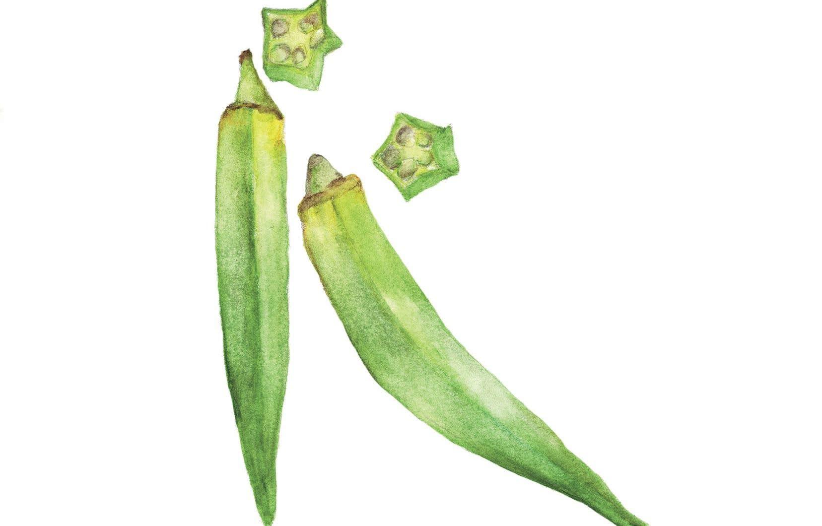 Aussi appelé gombo, l'okra se retrouve depuis quelques années dans les champs des fermes maraîchères et sur les étals des fruiteries du Québec.