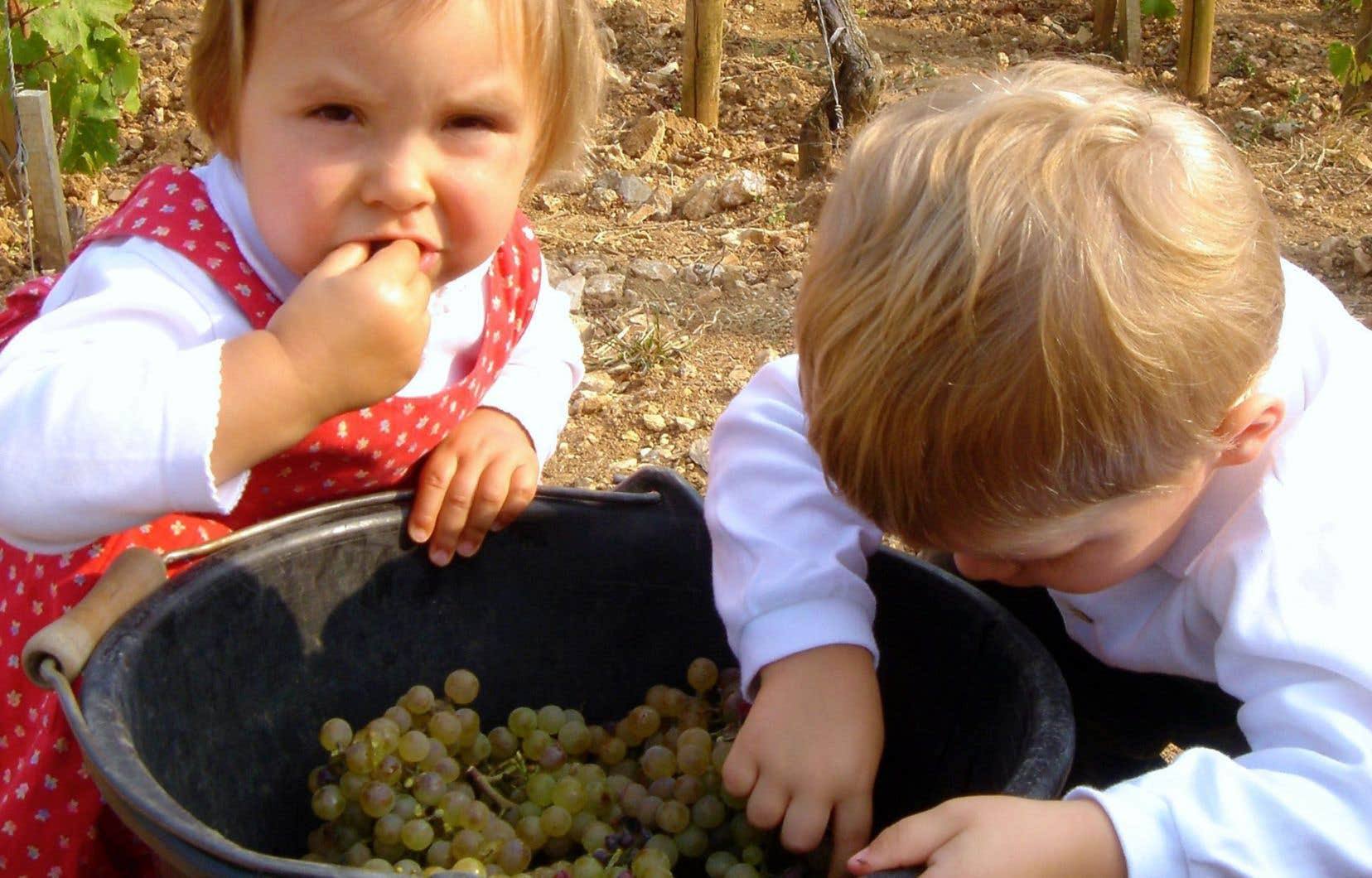 Du raisin à la bouteille puis, «Trouver celui qui aime mon vin»
