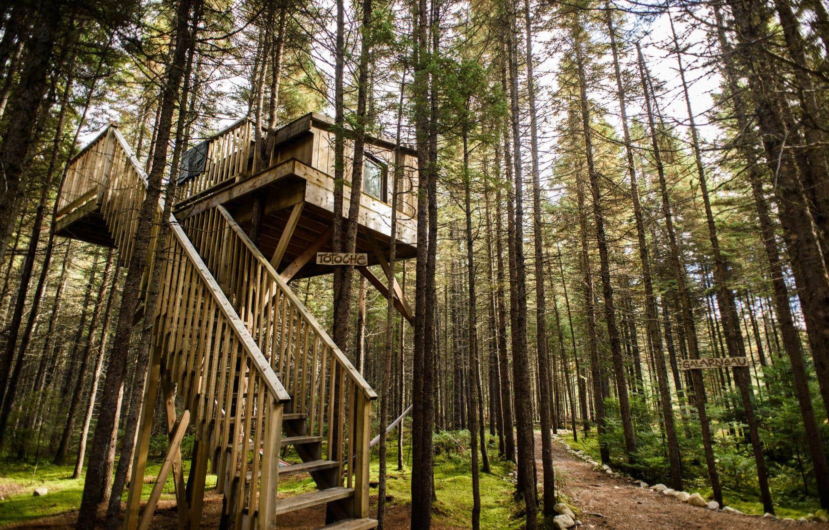 L'une des cabanes perchées de Kabania, située en plein cœur du parc régional de la Forêt Ouareau