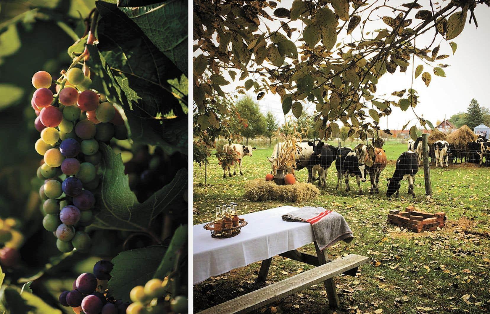 Une escapade d'automne est l'occasion parfaite de découvrir les innombrables produits du terroir qui poussent et s'affinent dans les campagnes québécoises depuis plusieurs années.