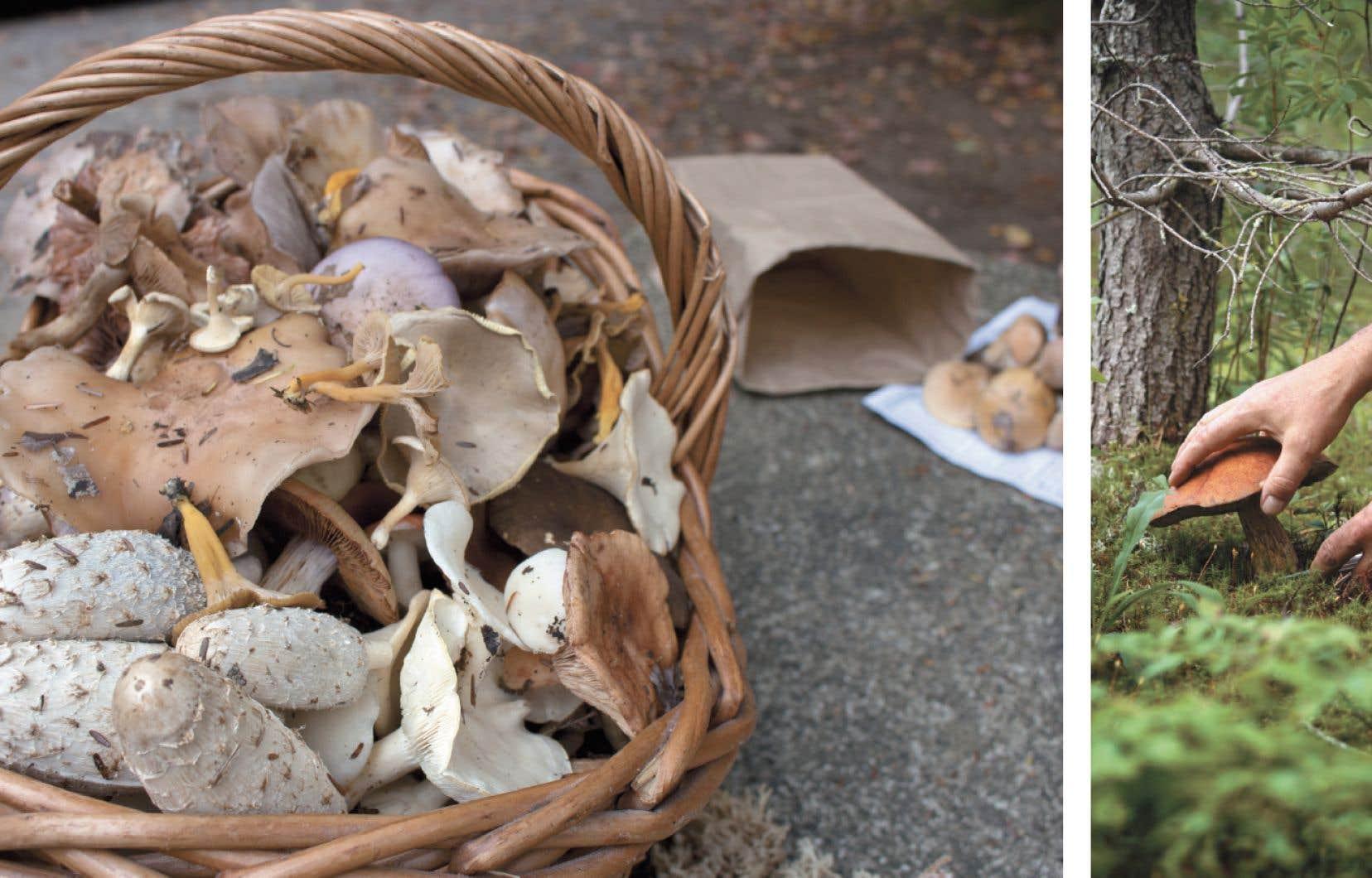 La Mycoboutique organise des sorties en forêt pour apprendre à reconnaître les champignons avec des guides aguerris.