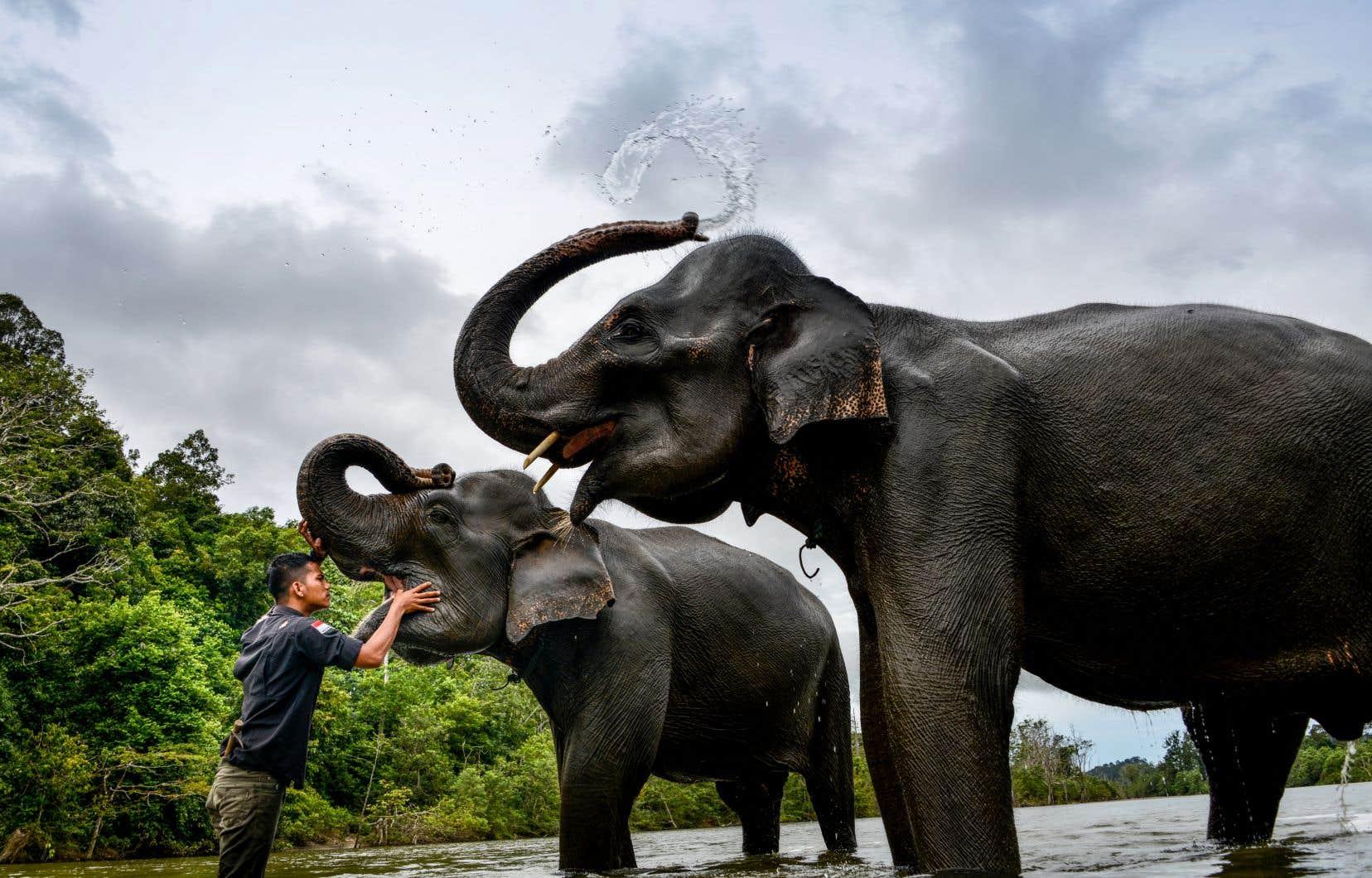 Entre 1970 et 2016, 68% de cette faune sauvage a disparu, selon l'Indice planète vivante, outil de référence publié tous les deux ans par le WWF.