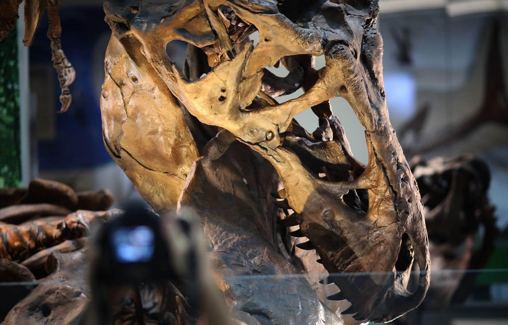 <p>Seule une cinquantaine de T-Rex ont été découverts depuis le premier, en 1902.</p>