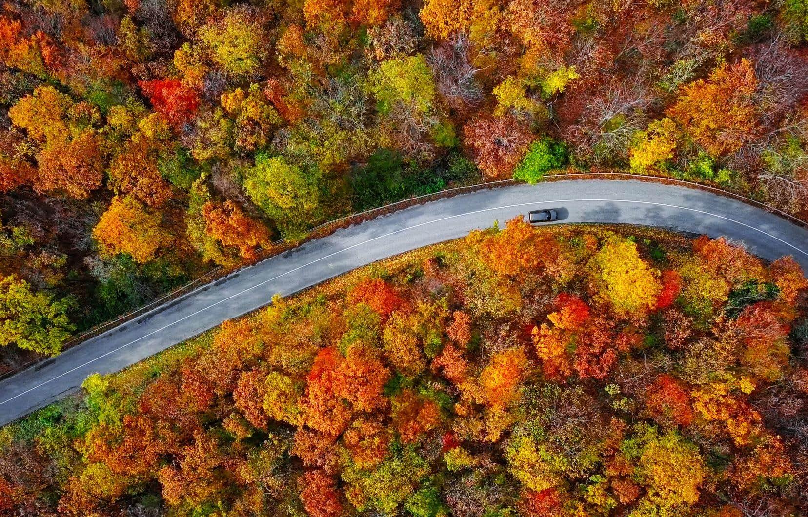 Les feuilles des arbres, vers la fin de septembre au Québec, commencent à changer de couleur à cause de la diminution du nombre d'heures d'ensoleillement. Mais est-ce le cas pour tous les arbres?