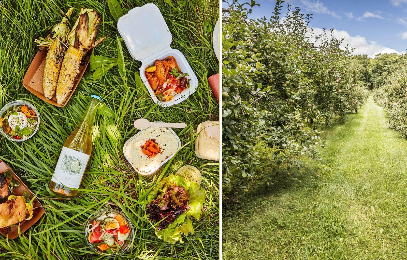 Pendant la saison des récoltes, La Cabane d'à côté offre une formule pique-nique à même le verger.