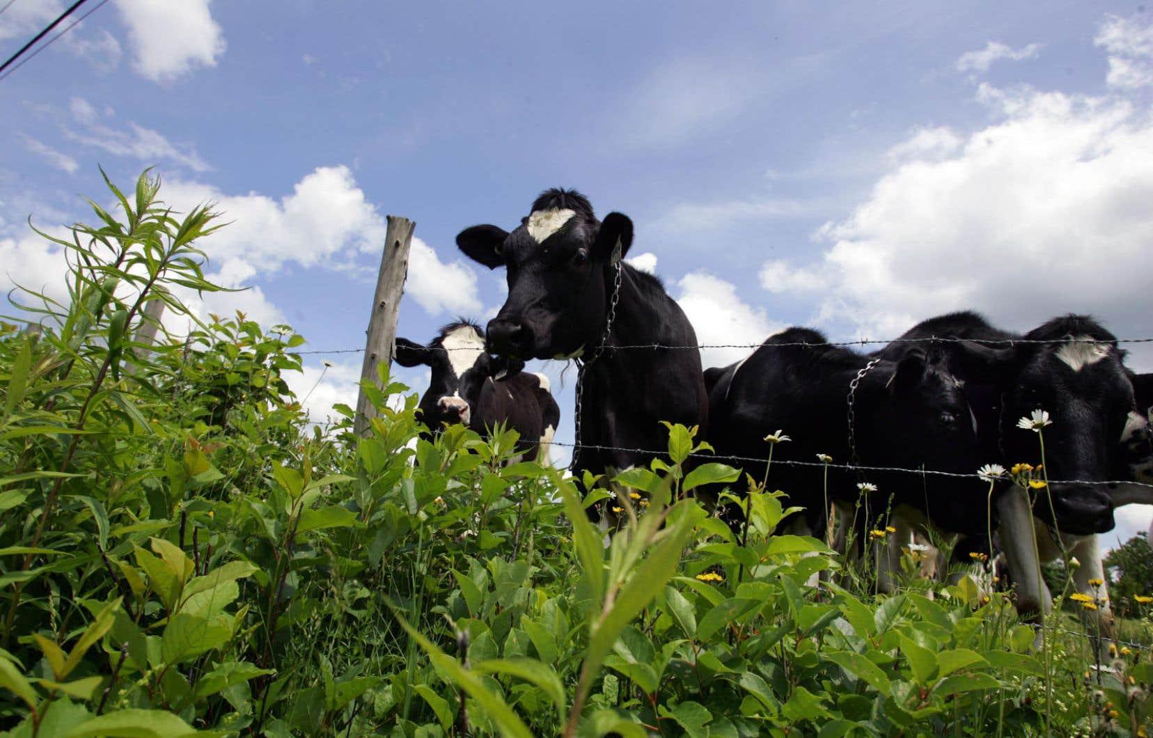 «Les aliments voyagent beaucoup entre la ferme et l'assiette. Pas étonnant qu'une partie de la population agricole perde de vue que la terre est la ressource de base de la production», soulignent les autrices.