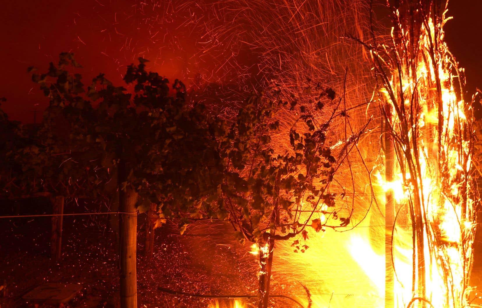 Le brasier nommé <em>Glass</em>, qui s'est déclenché dimanche, a dévoré selon les pompiers près de 4500 hectares dans le comté de Napa.