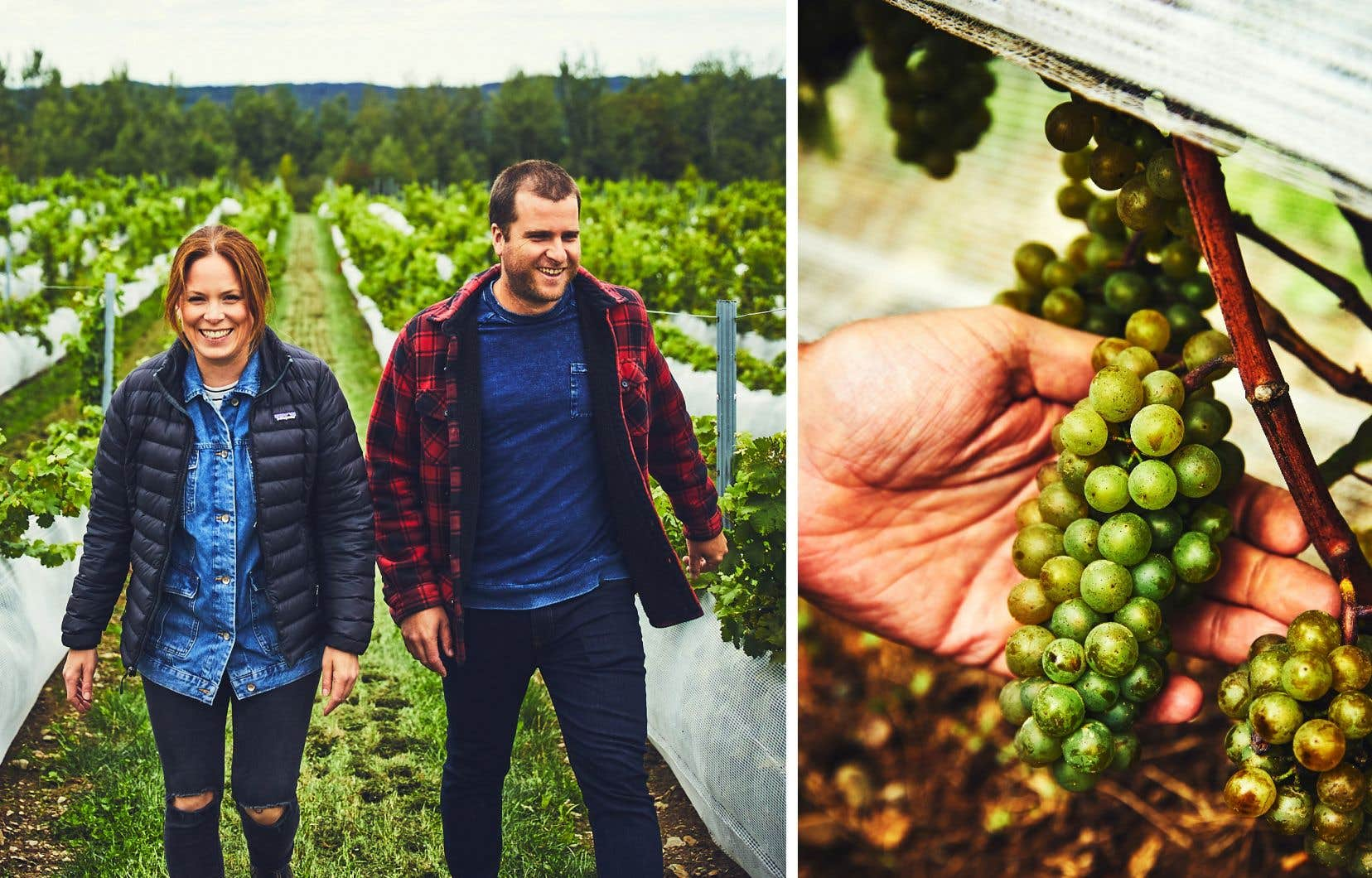 Après quatre années à soigner leurs vignes, Justine Thérien et Julien Niquet recueillent cet automne leurs premiers raisins mûrs.