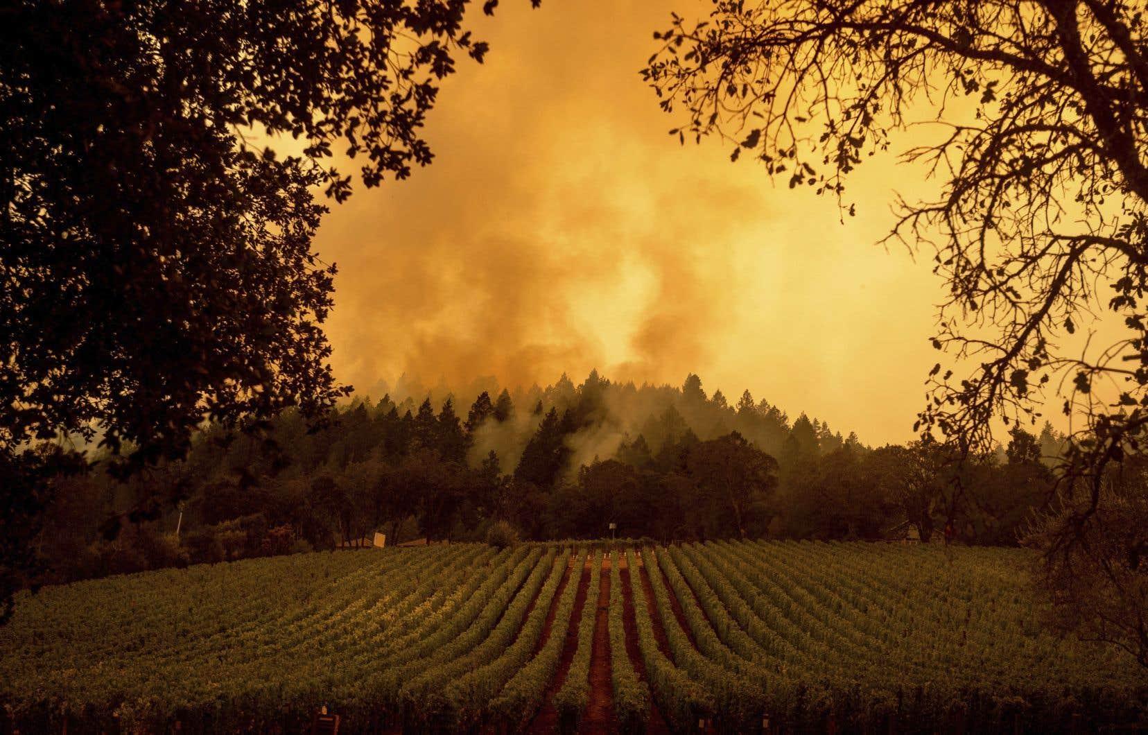 Au moins une dizaine de domaines viticoles ont brûlé en Californie depuis que le «Glass Fire», qui a ravagé plus de 20 000 hectares, s'est déclenché cette semaine dans le nord-ouest de l'État.