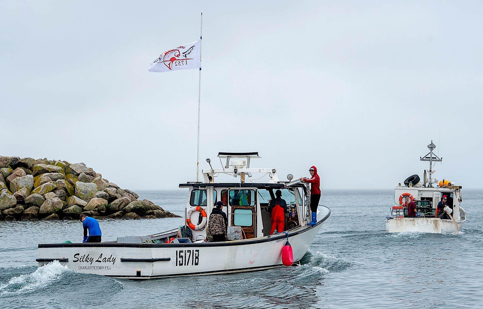 Avec environ sept bateaux actifs de 50 trappes (donc 350 au total), la pêche de la Première Nation de Sipekne'katik est une fraction de la pêche commerciale (autochtone et allochtone) qui débutera le mois prochain.