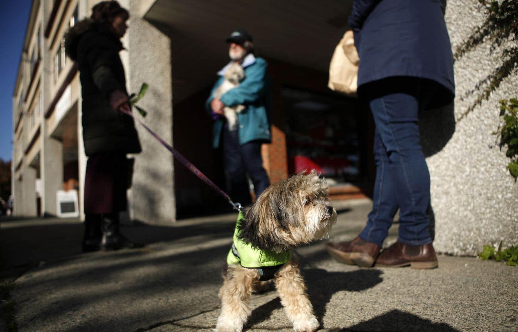 Scott Weese, chef du contrôle des infections à l'Ontario Veterinary College de l'Université de Guelph, précise que la plupart des propriétaires d'animaux n'ont pas à s'inquiéter.