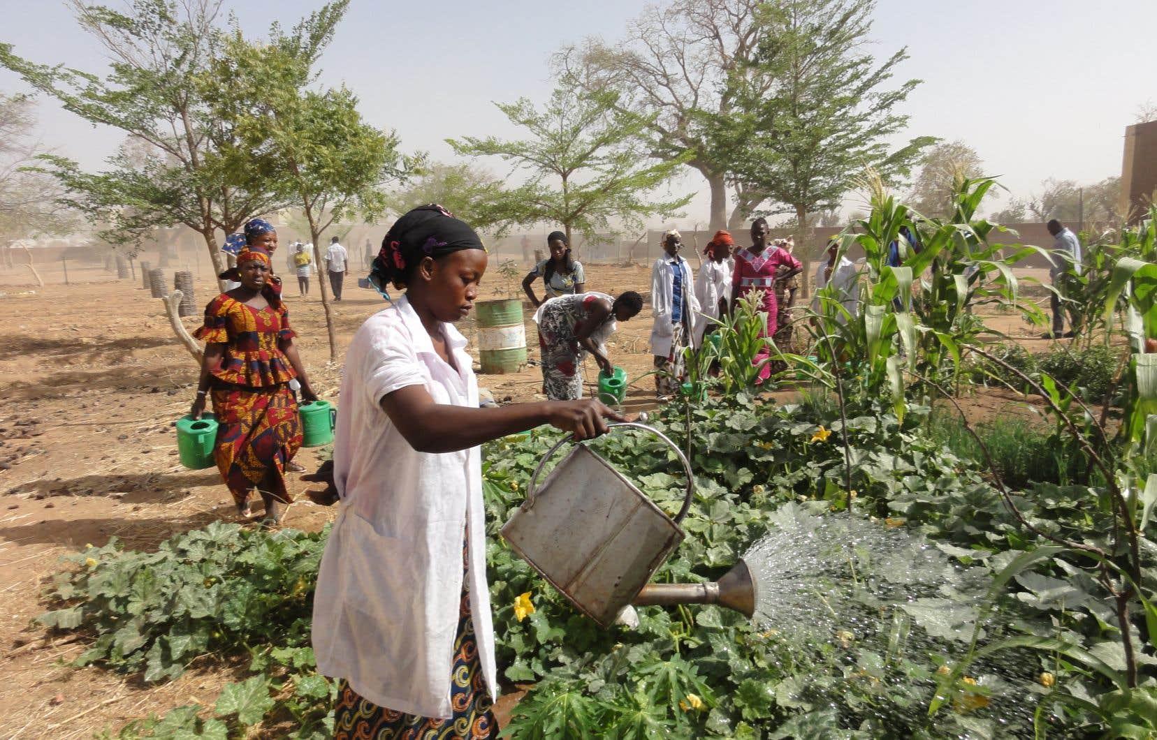 Au Mali, l'exode rural s'explique notamment par un désamour du métier d'agriculteur, perçu comme peu rémunérateur.
