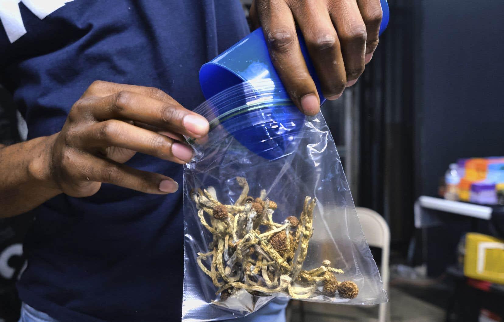 L'usage de la psilocybine, un stupéfiant tiré de certains champignons hallucinogènes, sera autorisé en Oregon selon certaines conditions.