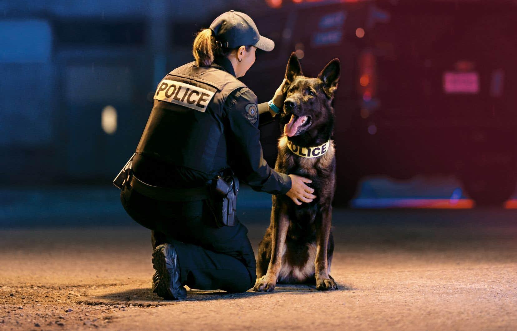 Chacun des huit épisodes de la docuréalité «Unité canine» présentera des cas particuliers qui nécessitent l'intervention de chiens pisteurs lors de patrouilles ou d'opérations de recherche, mais aussi celle des chiens de soutien qui accompagnent les témoins et les victimes de crimes.