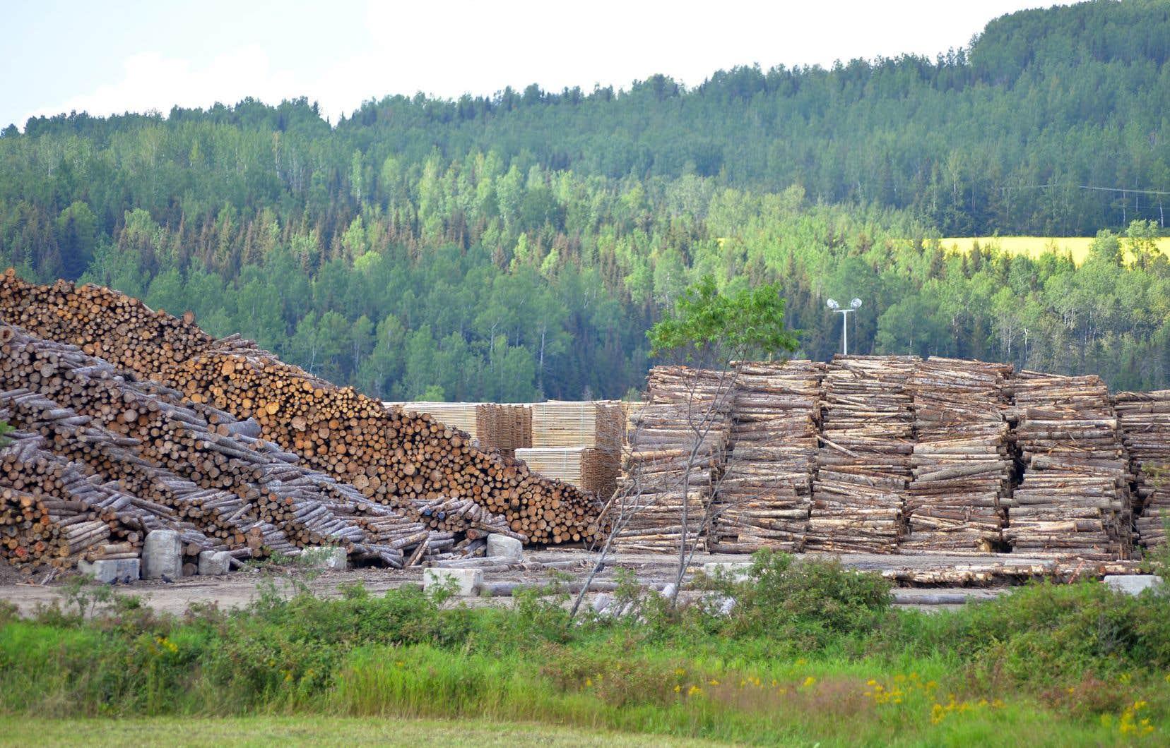 «Sur le plan pratique, il est urgent, selon nous, d'agir en utilisant nos forêts et les produits forestiers pour séquestrer et stocker le carbone», écrivent les auteurs.