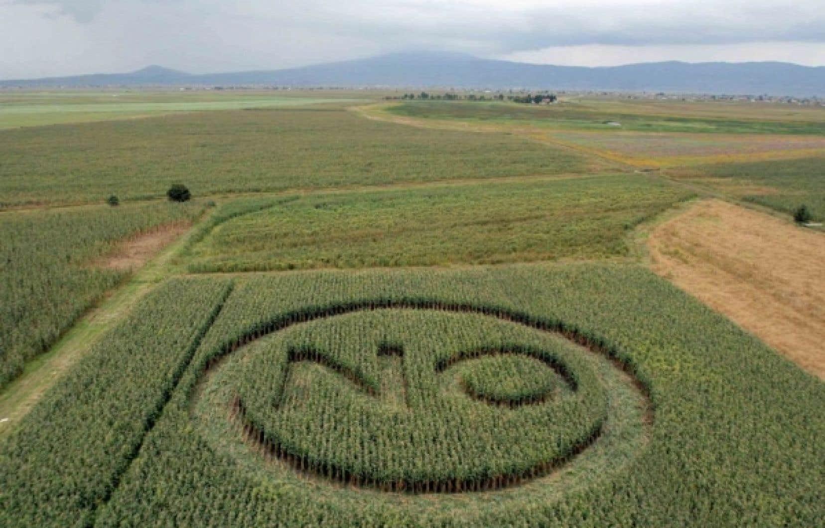 Des activistes de Greenpeace ont laissé leur marque dans ce champ mexicain, en guise de protestation contre les organismes génétiquement modifiés.