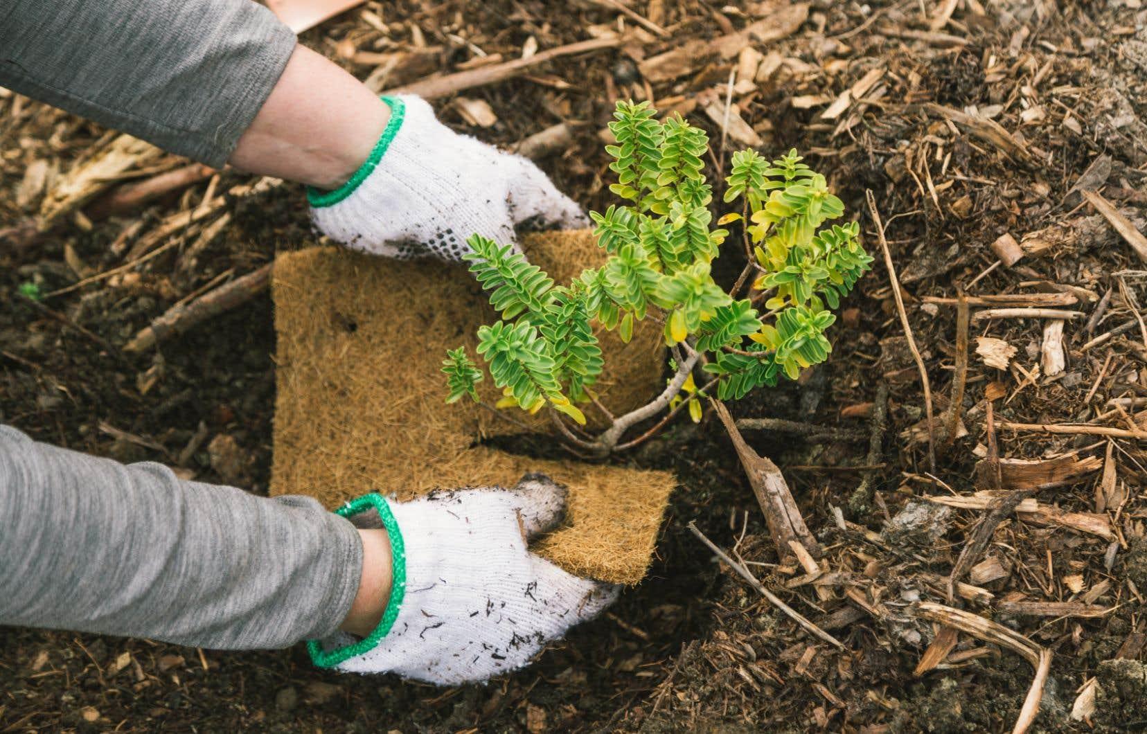 Les arbres seront notamment plantés le long du fameux Queenstown Trail, sur l'île du Sud de la Nouvelle-Zélande.