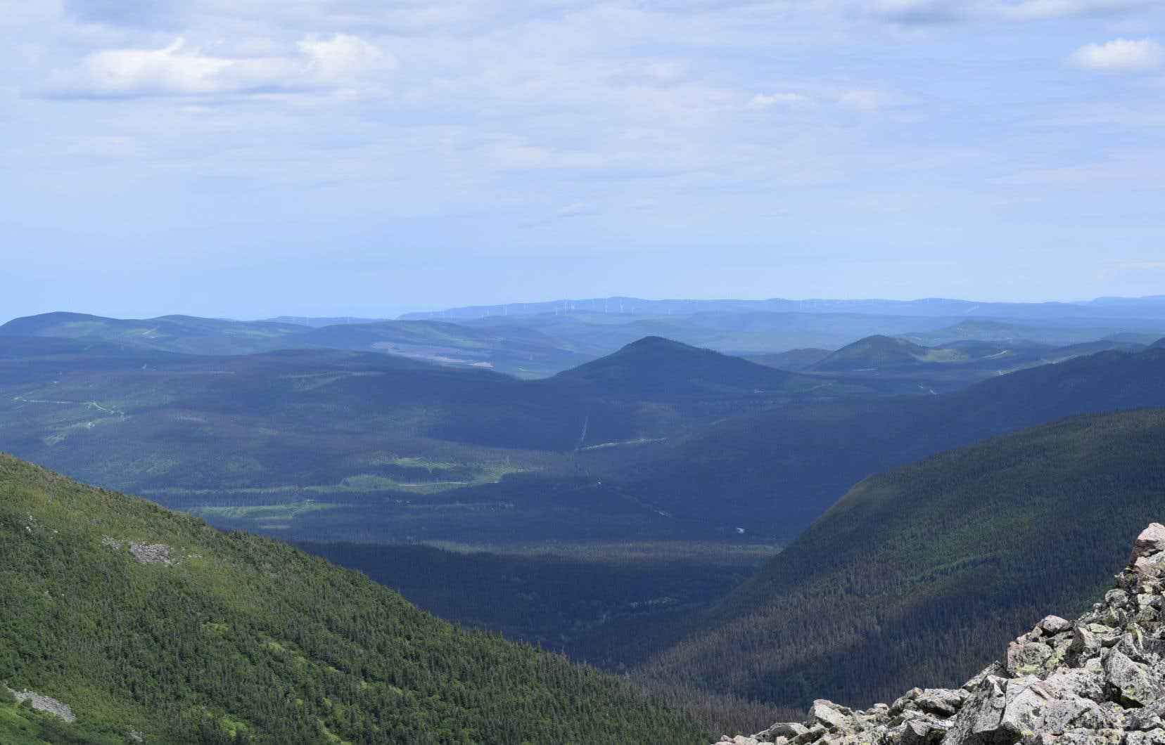 Le gouvernement ajoute une zone protégée aux limites du parc national de la Gaspésie, un territoire qui abrite une population de caribous au bord de l'extinction.