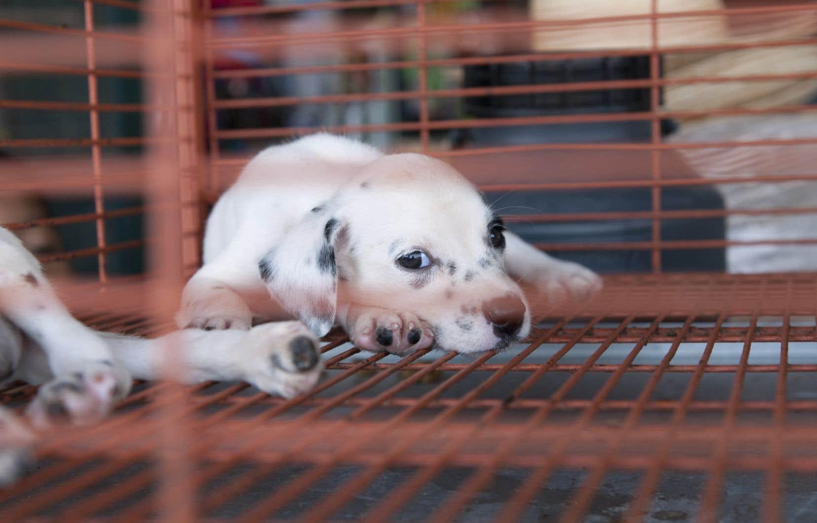 L'interdiction concernera chiens et chats, pas les petits mammifères de compagnie tels que les lapins ou les cobayes.
